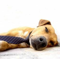 Produtividade e dormir bem
